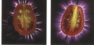 Kirlian-pomodori